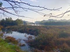 iph8141 (gzammarchi) Tags: italia paesaggio natura ravenna portocorsini piallassabaiona piallassa lago riflesso rete cornice