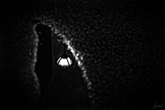 Elle vit le reflet du lampadaire dans la flaque. A cet instant, elle reprit espoir. (LACPIXEL) Tags: reflet reflexion reflejo lampadaire streetlight farol flaque charco puddle nuit night noche street rue calle noiretblanc blancoynegro blackwhite flickr lacpixel