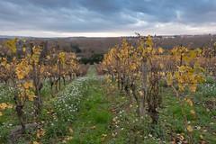 49604-Carcassonne (xiquinhosilva) Tags: 2018 carcassonne cité flickrsync:perm=public fortified france languedoc medieval occitanie unescoworldheritage aude