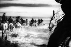 ... Tous devant et lui derrière... / ... And he was behind them... (vedebe) Tags: merméditerranée mer plage beach chevaux animaux camargue taureaux abrivado saintesmariesdelamer noiretblanc netb nb bw monochrome provence
