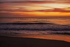 A Flock of Pelicans (lightonthewater) Tags: cocoabeach atlanticocean ocean pelicans sunrise clouds cloudy beach floridasunrise florida waves
