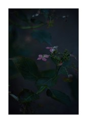 This work is 11/15 works taken on 2019/10/05 (shin ikegami) Tags: sony ilce7m2 a7ii sonycamera 50mm lomography lomoartlens newjupiter3 tokyo 単焦点 iso800 ndfilter light shadow 自然 nature naturephotography 玉ボケ bokeh depthoffield art artphotography japan earth asia portrait portraitphotography
