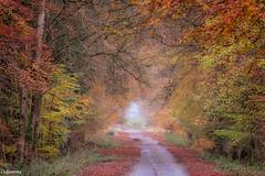 09112019-DSC_0003 (vidjanma) Tags: dinez arbres automne chemin