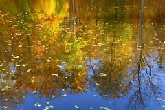 Und Sein Spiegelbild (ivlys) Tags: darmstadt steinbrückerteich wald forest teich pond herbst autumn bunt colourful spiegelbild mirrorimage landschaft landscape natur nature ivlys
