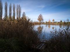 morning walk 14-11-2019 022 (swissnature3) Tags: switzerland bettenau countryside landscape nature autumn lake waterscape