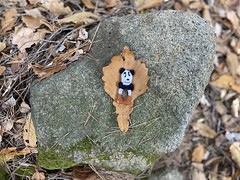 Covering their modesty (Panda Mery) Tags: animal fingerpuppet gwanaksan korea panda seoul