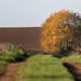 De Omkeerboom - Equirre - Pas de Calais