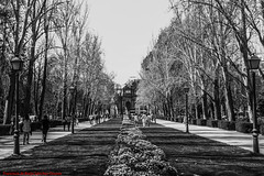 MARZO 2012 PASEO DE MÉJICO PARQUE DEL BUÉN RETIRO PUERTA DE ALCALÁ-Madrid (FRANCISCO DE BORJA SÁNCHEZ OSSORIO) Tags: passion photo pasión primavera photostreet parquedelretiro parquedelbuenretiro bokeh beauty belleza blackandwhite blancoynegro bw spring shot summer streetphoto street instant instante invierno winter verano vida view amor arrow autumn otoño nature naturaleza nice timeexposure tiempodeexposición temperaturadecolor color colour composition composición colourtemperature detalle detalles detail details desenfoque disparo divertido delicado delicate dof depthoffield puertadealcala 35mm 50mm objetivonormal