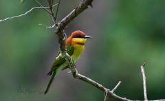 _DSC0844 (j.m.sohag) Tags: birds birdography naturalbeauty lovelynature wildbird wildlifephotography wilderness wildlife wildanimal birding