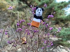 Collecting flowers (Panda Mery) Tags: animal fingerpuppet gwanaksan korea panda seoul
