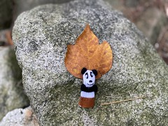 Panda bodhisattva (Panda Mery) Tags: animal fingerpuppet gwanaksan korea panda seoul