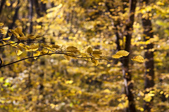 Yellow nature (Dumby) Tags: landscape ilfov românia yellow nature autumn fall forest leafs