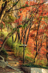 Fall foliage in Seoul (Thierry Laplanche) Tags: ansan seoul fall 단풍 안산