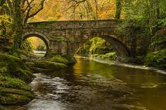 Cheers Burt (Brian + H & H) Tags: devon dartmoor denhambridge river cowssheepponies burt houndofthebaskervilles hosterly autumn leaves