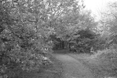 Into the woods (nigel@hornchurch) Tags: monochrome pb130013 olympus penf