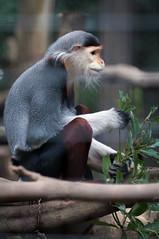 120425 Zoorasia-07.jpg (Bruce Batten) Tags: animals captive honshu japan kanagawa locations mammals subjects terrestrial vertebrates yokohama zoorasia zoos