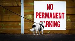NO PERMANENT BARKING !! . . . woof ? (Graeme O'Rourke) Tags: lrcf2k7504 dog sign animal walking fun outside white red explore pet walk inexplore14112019
