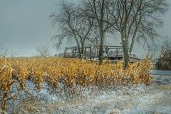 Snowy Cornfield (markburkhardt) Tags: corn snow winter farm harvest tree old barn crop sky grey rural