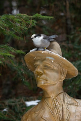 Quintessentially Canadian (NicoleW0000) Tags: canadajay greyjay grayjay corvid bird wildlife nature winter snow statue wood carving logger canada park