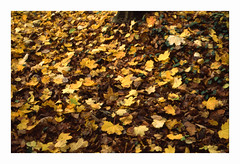 * (Daniel Espinoza) Tags: fujiprovia100 film zeiss ikon 35mmfilm filmphotography analogphotography analogica autumn otoño herbst diapositive transparency suisse schweiz switzerland suiza danielespinoza landscape fineart