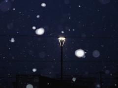 Snow (poota123) Tags: 2019 november roofs snow streetlights