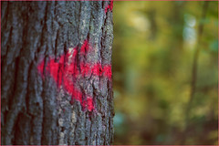 Into the forest. To the dark side of the moon. (Gudzwi) Tags: grün pink grau pfeil markierung spaziergang licht lichtspiel dunkel hell kontrast farbig zweiteilung blätter baum baumstamm baumrinde bokeh geringetiefenschärfe spaziergangimherbst herbstspaziergang green gray arrow mark walk light lightgame dark bright contrast coloured bisection leaves tree treetrunk bark shallowdepthoffield walkinthefall forest fall autumn woods