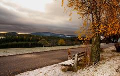 Herbst - Winter Atmosphäre (Mariandl48) Tags: herbstwinteratmosphäre schnee herbst winter rosa katze herbstlandschaft sommersgut wenigzell steiermark austria