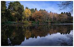 Autumn reflections (dandraw) Tags: autumn autumncolours autumnleaves autumnlight yearslyforest yorkshire northyorkshire reflection reflections mirrorimage colourfull colours woods woodland trees fuji fujifilm xt3