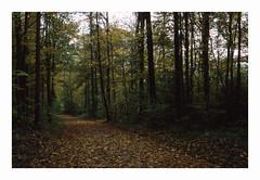 * (Daniel Espinoza) Tags: film fujiprovia100 autumn zeiss 35mmfilm ikon analogphotography analogica filmphotography landscape schweiz switzerland suisse suiza fineart herbst transparency otoño diapositive danielespinoza