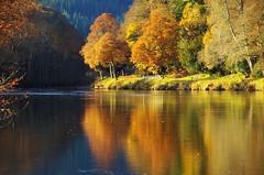 Autumn colours on the Tay (eric robb niven) Tags: ericrobbniven scotland dunkeld perthshire autumn springwatch
