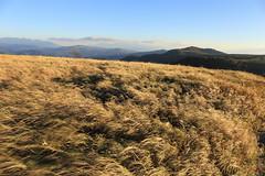 at Utsukushigahara highland, Yatsugatake National Park in Nagano prefecture (yasushiinanaga) Tags: landscape natuer mountain sky yellow susuki wind canoneos6d ef2470mmf4lisusm 24mm