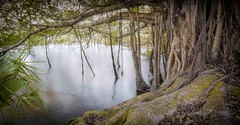 Parler avec un Arbre Glorieux (JDS Fine Art Photography) Tags: tree treeroots glorious glorioustrees inspirational nature panorama ndfilter landscape forest woods naturepark beauty naturalbeauty naturesbeauty elitegalleryaoi bestcapturesaoi aoi