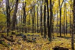 IMG_5324_Done (PawelPach) Tags: devilslakestatepark baraboo wisconsin fall colors leaves leaf fallcolors orange water panorama park scenery lake trees red rock rocks view