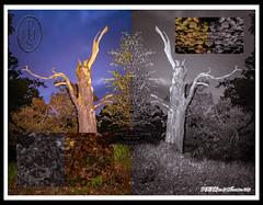 Creatures of the Centrefold Realms of Reflection 1 of 3 (PHH Sykes) Tags: realms reflection creatures centrefold mirrorimage kaleidoscope symmetrical pattern pareidolia