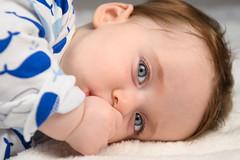 "005 -- October 16, 2019 -- Homw studio tests -- Full resolution -- PULLEN -- DSC_9927 -- NIKON Z 6 -- 24.0-70.0 mm f-2.8 (Lee ""Pulitzer"" Pullen) Tags: nikonz6 z6 juno baby babyphotography nikkorafs2470mmf28ged"