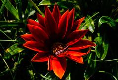 Harmonious (Jose Rahona) Tags: flor flores flowers jardin garden parque park hojas leaves