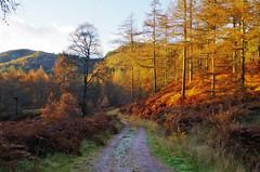 Atholl Woods (eric robb niven) Tags: ericrobbniven scotland dunkeld atholl woods landscape springwatch