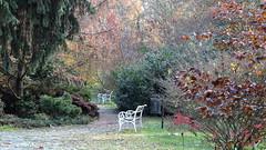 2019-11-14 Autumn Melancholy (beranekp) Tags: czech botanik teplice teplitz autumn garden herbst botanic melancholy garten