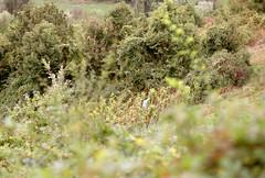 Autumn in the countryside: improvised scare-crow (elkarrde) Tags: c41 colornegative x300s developer:name=c41 filmneverdieiro200 autumn nature landscape minolta september 2019 minoltax300s mdmount camera:brand=minolta camera:model=x300s camera:mount=srmd minoltamdtelerokkor128135mm agfa 135mm 13528 rokkor lens:focallength=135mm agfaphotovista200 lens:brand=minolta minoltamdtelerokkor135mmf28 lens:maxaperture=28 lens:mound=srmd lens:model=telerokkor128135mm color film plustek agfaphoto film:process=c41 film:brand=agfa vistaplus vistaplus200 agfaphotovistaplus200 plustekopticfilm8100 opticfilm8100 film:basesensitivity=200asa film:name=agfaphotovistaplus200 summer vineyard bokeh sunny depthoffield grapes grapepicking summer2019 september2019