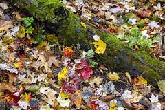 IMG_5322_Done (PawelPach) Tags: devilslakestatepark baraboo wisconsin fall colors leaves leaf fallcolors orange water panorama park scenery lake trees red rock rocks view