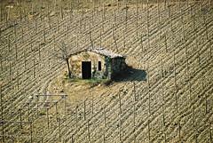 Piedmont wineyards (panoround hutter) Tags: nature natur autumn winter piemont wine wein