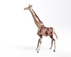 Giraffe V2 (bodorigami) Tags: papier spots art paper design degree 225 giraffe origami