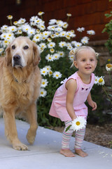 Playmates - playing red light, green light! (Karon Elliott Edleson) Tags: pet child outdoor golden retriever dog toddler granddaughter playing smileonsaturday peopleandpets daisies