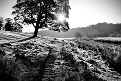 Wayfarer (plot19) Tags: nikon north northern northumberland love light landscape britain blackwhite blackandwhite england uk plot19 photography alnwick trees sunset sunrise