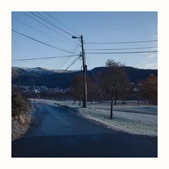 (Thorir Vidar) Tags: bergen hordaland norway thorir1911144359st2 treeinthemiddle