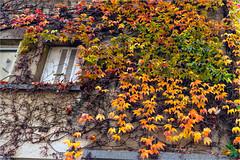 _DSC0059.1119 Autumn leaves (HUONGBEO PHOTO) Tags: autumn natural leaves sonya7r sonyfe28mmf2 paris16