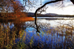 Loch Craiglush (eric robb niven) Tags: ericrobbniven scotland dunkeld perthshire loch craiglush springwatch