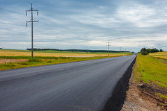 New Pavement (Bracus Triticum) Tags: new pavement アルバータ州 alberta canada カナダ 8月 八月 葉月 hachigatsu hazuki leafmonth 2019 reiwa summer august