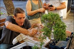 Bonsai   Blanes, Catalonia (Flemming J. Gade) Tags: bonsai man tree knife blanes catalonia