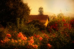 Light Speaks But Shadows Say More (Christina's World :) Tags: 3460 landscape painterly roses garden impressionism impressionistic historicbuilding building architecture arches scenic sky brightcolors bird flying trees textures oldmasters morninglight historic mission sanjuancapistrano topaz touristattraction socalifornia california orangecounty morning gold vintage exhibitoftalent kurtpeiser topclass coth5